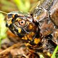 Turtle by Shirley Sykes Bracken