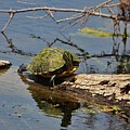 Turtle Stretch  by Cynthia Guinn