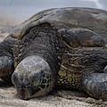 Turtle Up Close by Pamela Walton