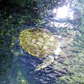 Turtle Water Glide by Francesca Mackenney