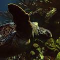 Turtle Wave by Janet Fikar