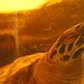 Turtled by Jez C Self