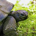 Turtles Eye View by Louis Dallara