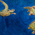 Turtles by Julia Collard