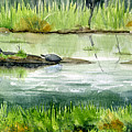 Turtles by Mary Tuomi