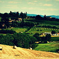 Tuscan Country by Lainie Wrightson