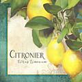 Tuscan Lemon Tree - Citronier Citrus Limonum Vintage Style by Audrey Jeanne Roberts