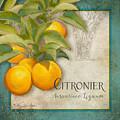 Tuscan Orange Tree - Citronier Aurantiaco Lignum Vintage by Audrey Jeanne Roberts