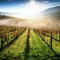 Tuscan Sunrise by Alessandro Landi