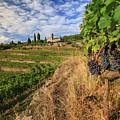 Tuscan Vineyard And Grapes by Alessandro Landi