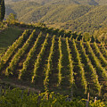 Tuscan Vineyards At Sunset by Jim DeLillo