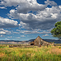 Twaddle-pedroli Ranch by Dianne Phelps