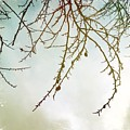 Twigs And Winter Sky Two by Mo Barton