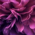 Twilight Breeze by Darlene Kwiatkowski