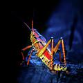 Twilight Grasshopper by Mark Andrew Thomas