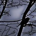 Twilight by Lauren Radke
