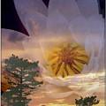 Twilight Lily by Priscilla Richardson