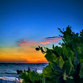 Twilight Mangrove by Marvin Spates