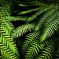 Twilight Rainforest Fern  by Jorgo Photography - Wall Art Gallery