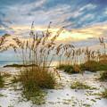 Twilight Sea Oats by Steven Sparks