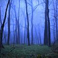 Twilight Woods by Vicki France