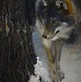 Twilight's Preyer  by James Berger