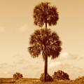 Twin Palms by Peg Urban