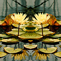 Twin Pond Lillies by Bruce Richardson