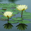 Twin Reflections by Suzanne Gaff