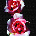 Twin Roses by Ralph  Perdomo