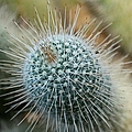 Twin Spined Cactus by Michiale Schneider