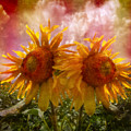 Twin Sunflowers by Debra and Dave Vanderlaan