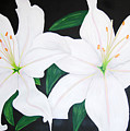 Twin White Lillies by Sarah England-Rocca