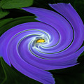 Twirling Flower Pedals by Rick Strobaugh