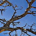 Twisted Branches - Natural Abstract by Glenn McCarthy Art and Photography