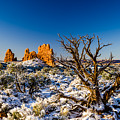 Twisted Cedar Arches National Park by TL Mair