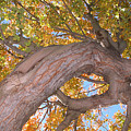 Twisted Tree by Nancy Barch