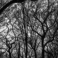 Twisted Trees by Robert J Caputo