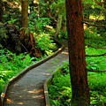 Twisting Path Through The Woods by Jeff Swan
