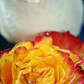 Two Beautiful Roses by Lali Kacharava