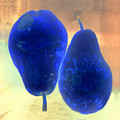 Two Blue Pears On Peach  Side By Side by Heather Kirk
