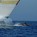 Two Bottlenose Dolphins Swimming In Front Of A Ship by Sami Sarkis