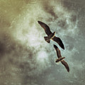 Two By Two They Flew by Allison Carlysle