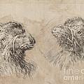 Two Camel Heads [recto] by Stefano Della Bella