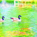 Two Canadian Geese In The Water by Jeelan Clark