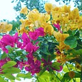 Two Color Flowers by Graciela Castro