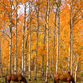 Two Colorado High Country Autumn Horses by James BO Insogna
