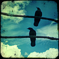 Two Crows Blue Lomo Sky by Gothicrow Images