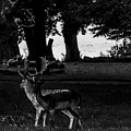 Two Deer Black And White Ink Effect by Nigel Dudson