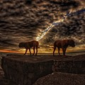 Two Dog Sunset by Lliem Seven
